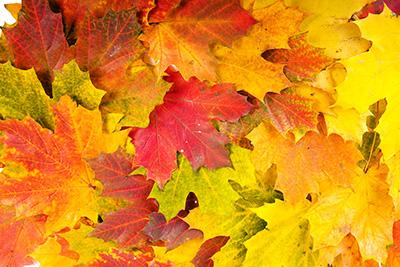 farebna typologia - jesenné farby