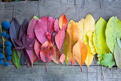 farby jesene- farebná typológia